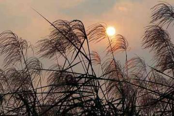 苏轼黄庭坚评张志和《渔歌子》