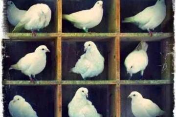 鸽巢原理是什么?鸽巢原理在数学中的巧妙应用