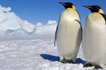 北极为什么没有企鹅?