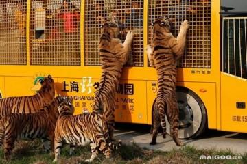 上海有什么好玩的景点?上海旅游攻略大全