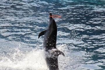 深圳野生动物园攻略,一个不错的假日旅游景点