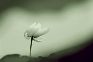 人生失意时要懂得心宽
